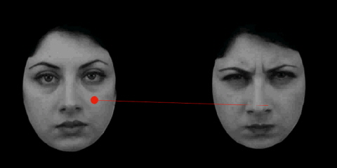 Example of stimuli involving faces, displayed to test subjects