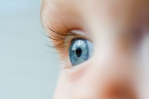 Focus on a baby blue eye
