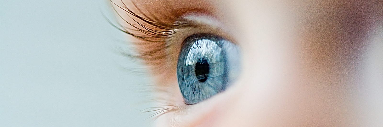 Focus on a baby blue eye